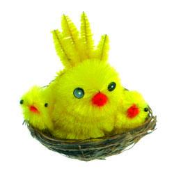 Pollitos nido